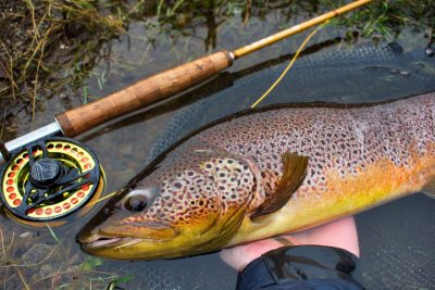 guided brown trout caught on fly fishing trip