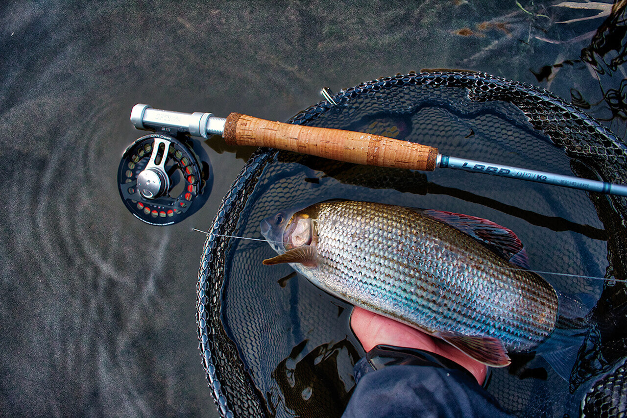 guided fly fishing for grayling